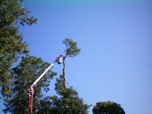 Trees Unl 2 018